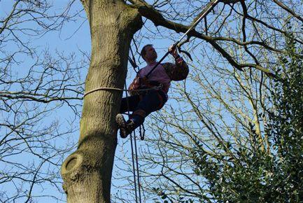 Tuinonderhoud boomverzorging Hovenier Driebergen